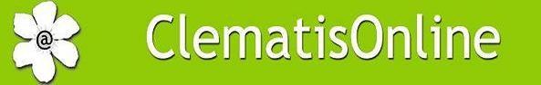 Clematis und Efeu - Günstig online Kletterpflanzen kaufen
